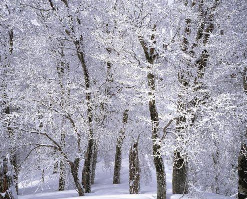 Faggeta Neve