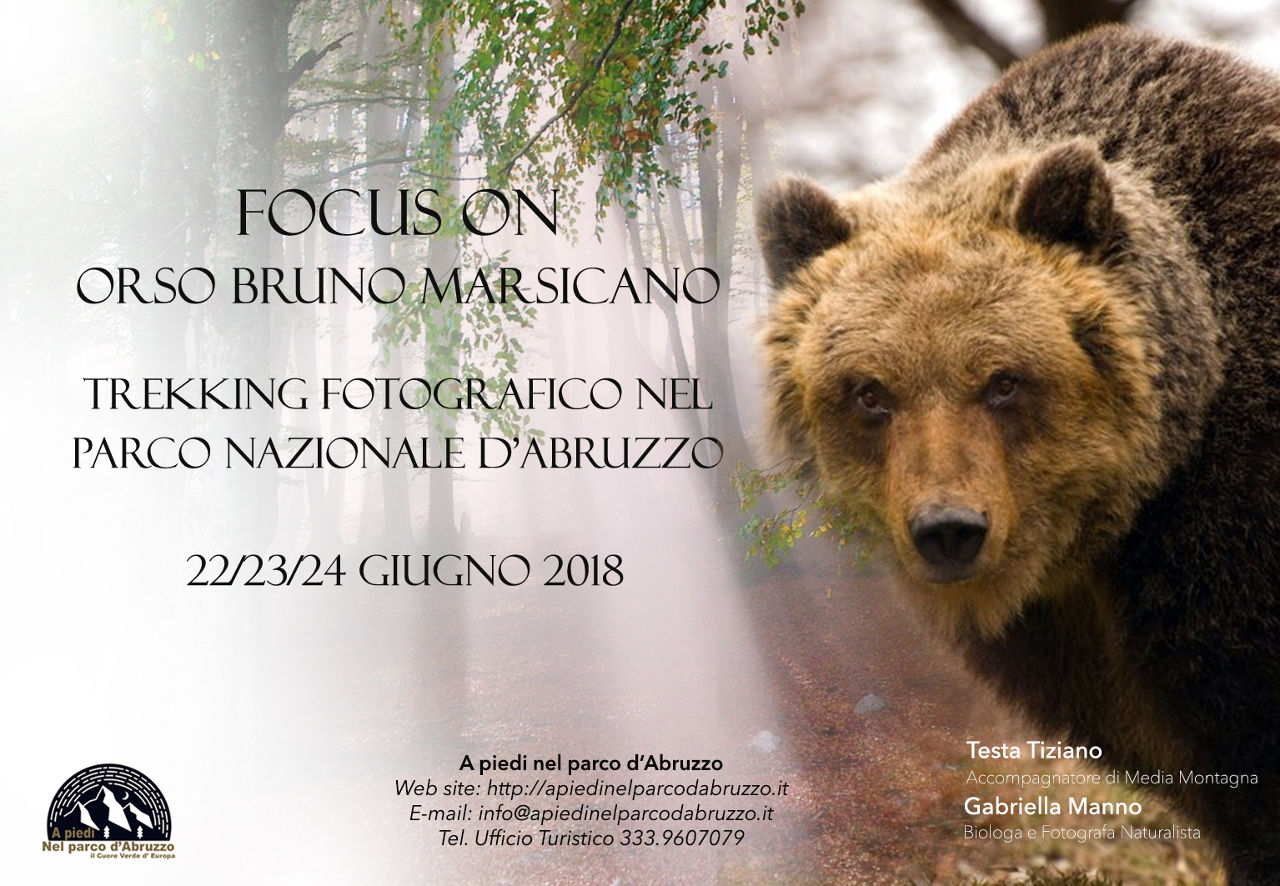 Trekking fotografico FOCUS ON: Orso bruno marsicano