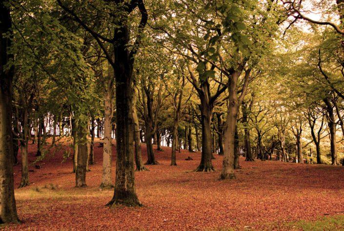Bosco foresta PNALM 1