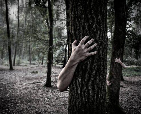 Bosco foresta PNALM 2
